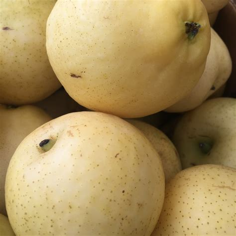 Pears the worlds healthiest foods jpg 640x640